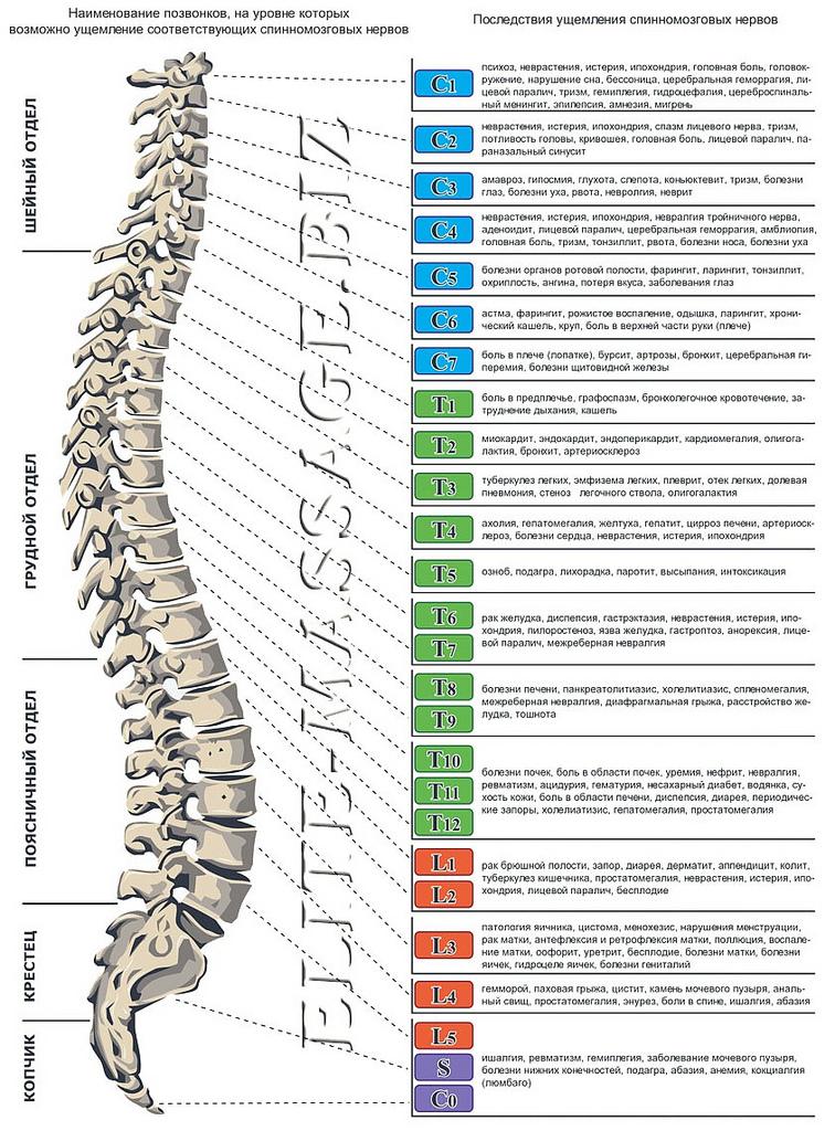 Заболевания позвоночника - центр мануальной терапии и массажа ...